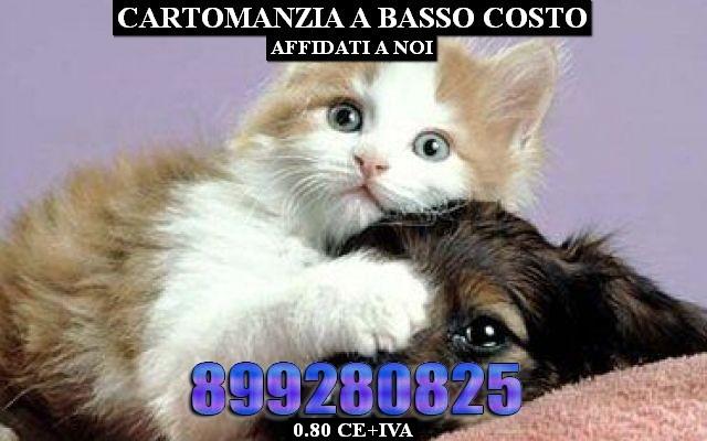 1248234_cani-gatti_thumb_big